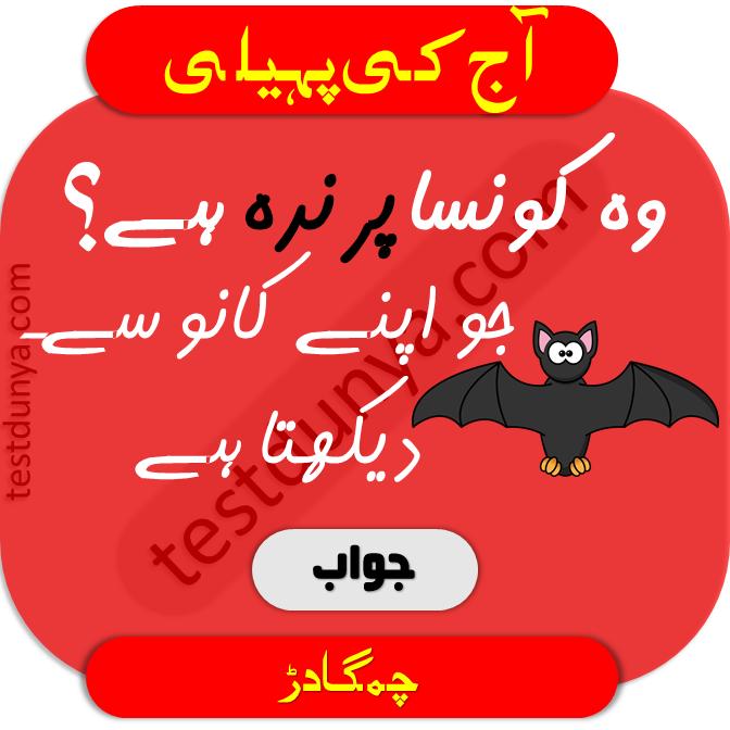 Riddles in urdu for kids 7 woh konsa prinda hy jo kaano sy dekhta hy