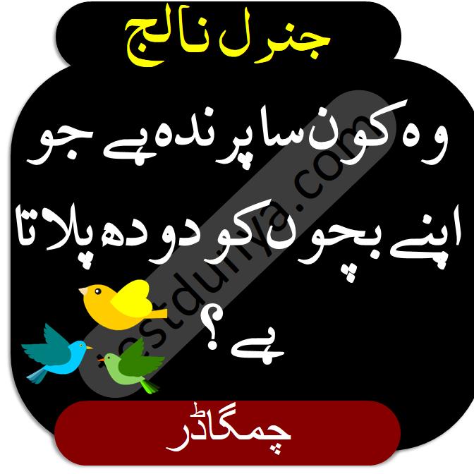 General Knowledge Questions and Answers in Urdu wo konsa parinda hai jo apny bachon ko doodh pilata hai