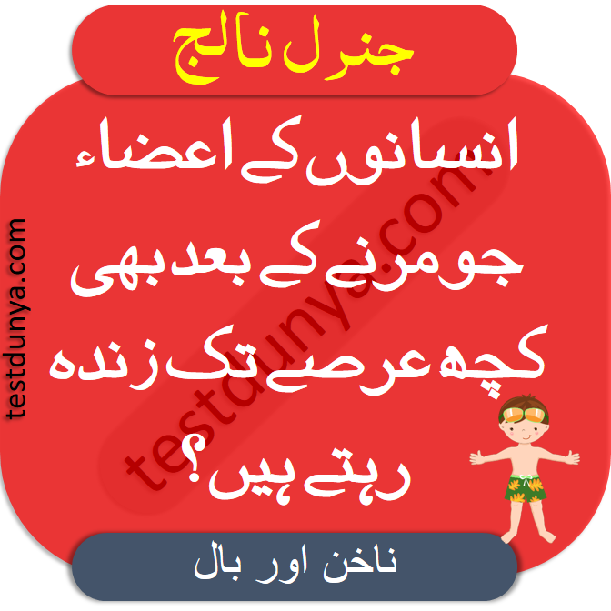 Common Sense Questions With Answer in Urdu interesting mind questions answers in Urdu general knowledge about world with correct answers.