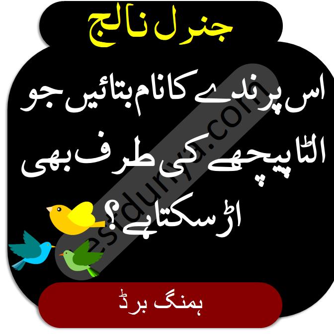 General Knowledge Questions and Answers in Urdu us parindy ka nam btaayen jo ulta peechy ki traf bhi urh sakta hai