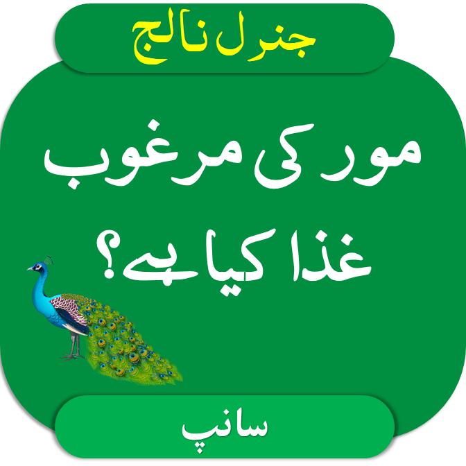 Urdu mcqs mor ki margoob giza kiya hai