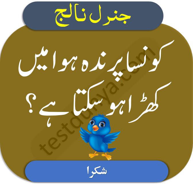 Urdu general knowledge questions and answers shair ky bachon ko English main kiya kehty hain